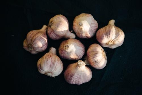 Garlic,a wonderful prebiotic food.