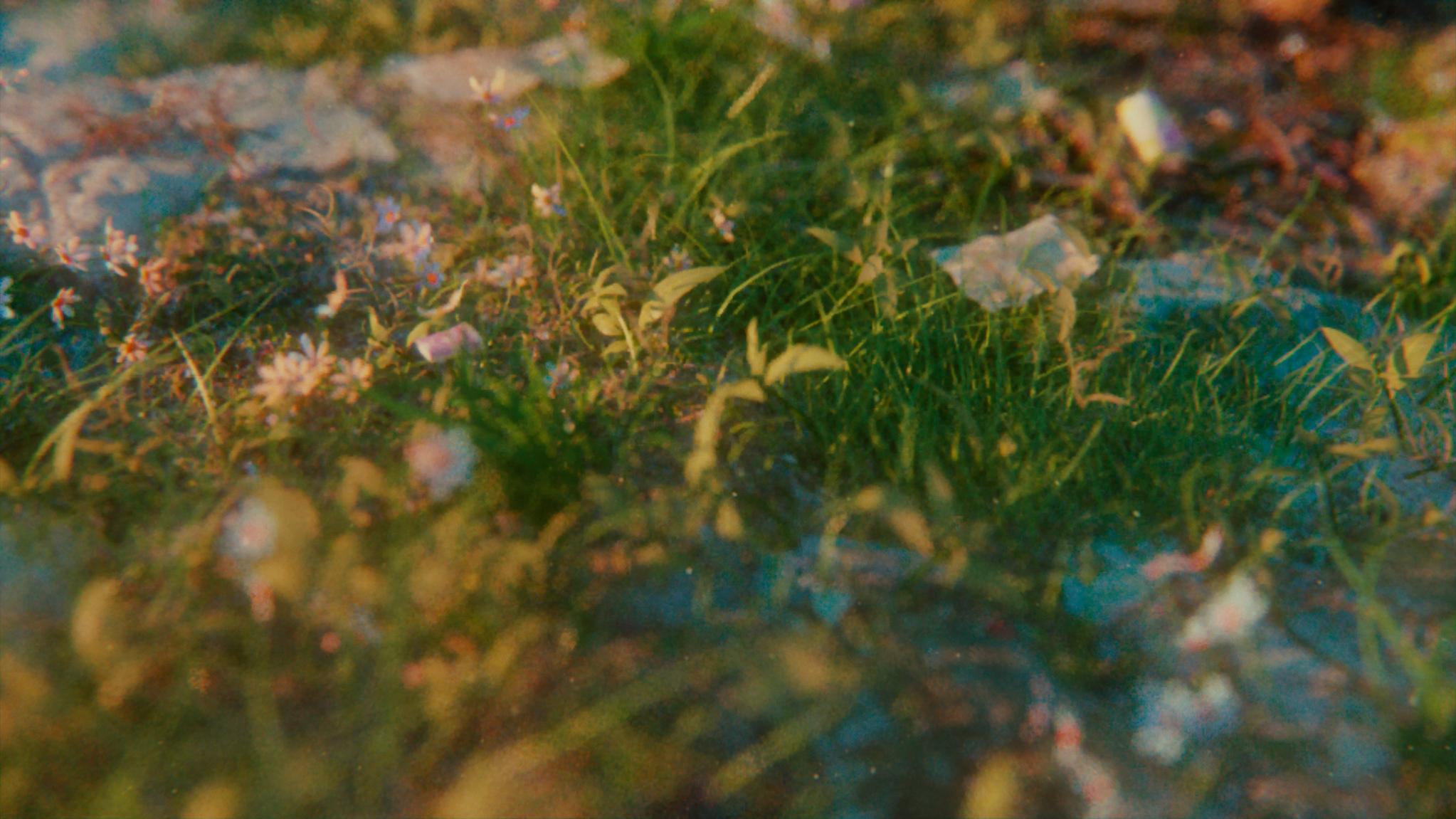 grass_001.png