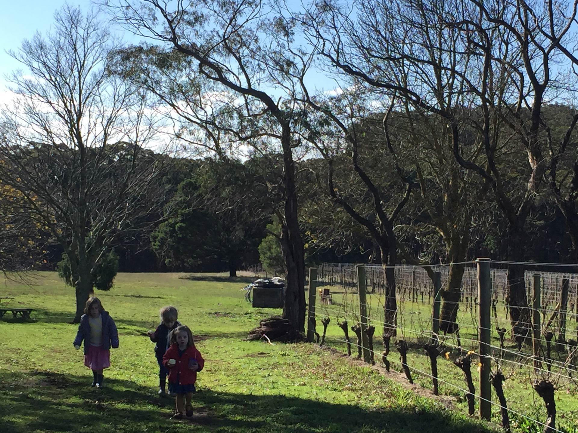 kids-in-vineyard.jpg