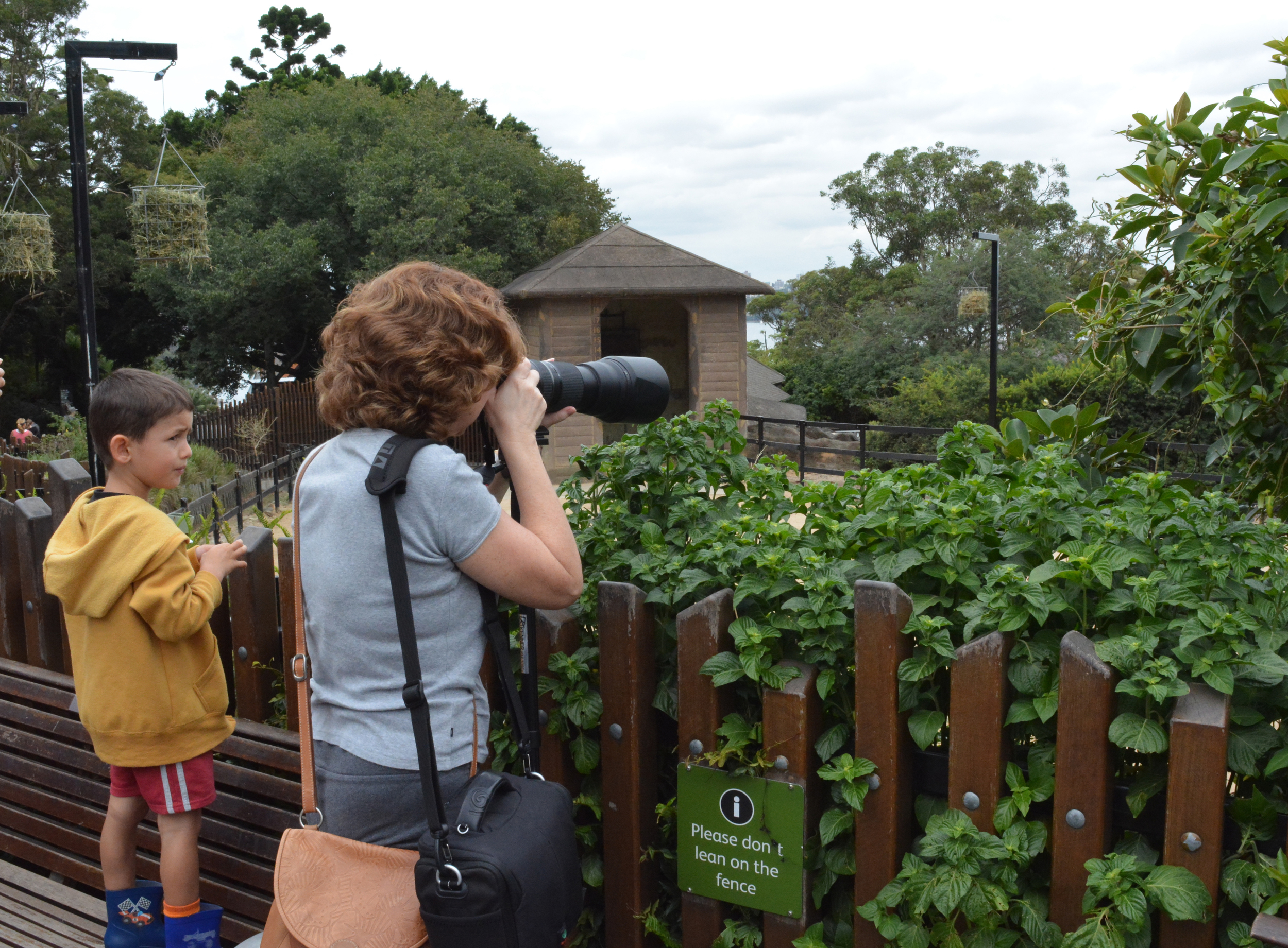 Taking some photos of the giraffes.