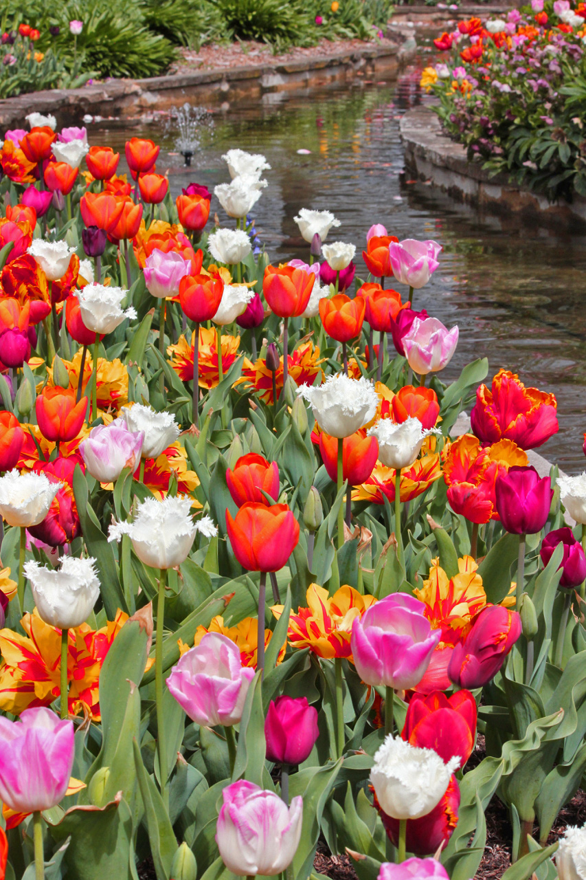 Tulip Time at Bowral