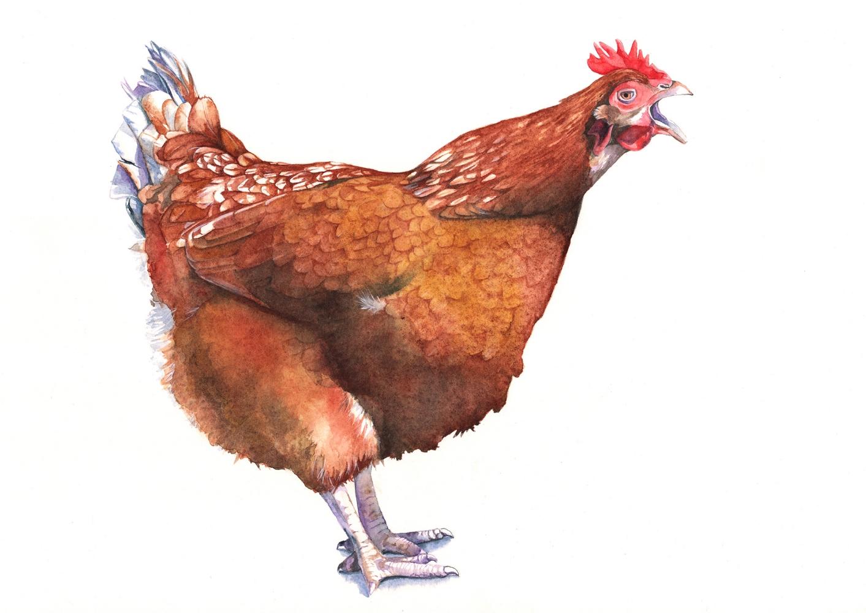 Henrietta in watercolour.