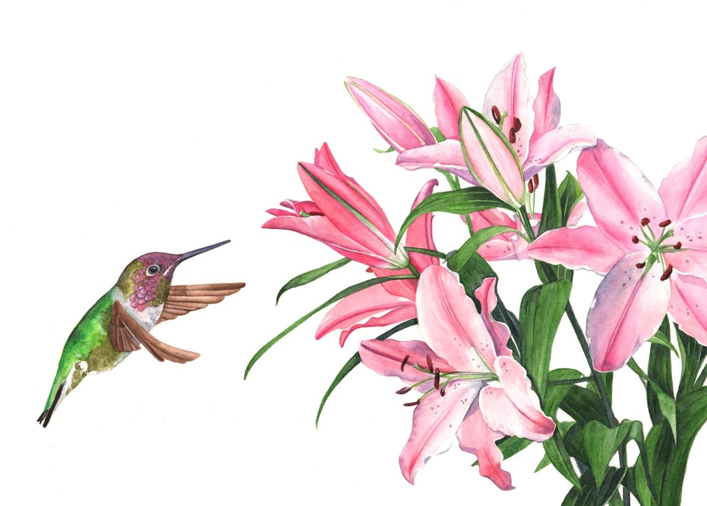 Hummingbird with lilies Louise De Masi