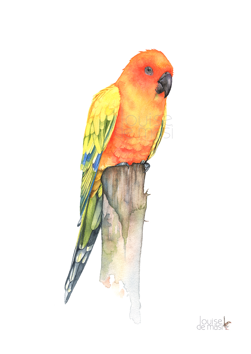 Sun Conure pixel reduced.jpg