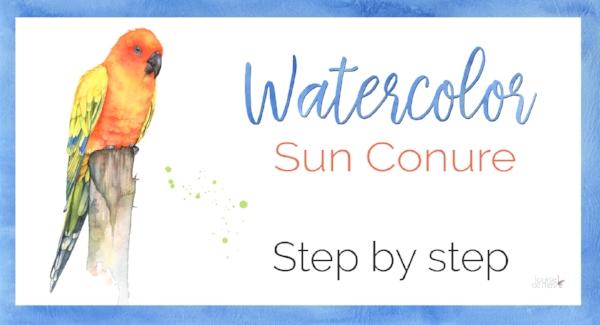 sun conure step by step.jpg