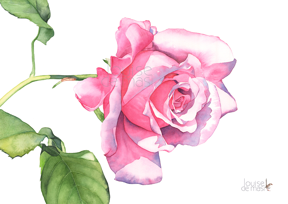 Rose pink mine heaven scent pixel reduced.jpg