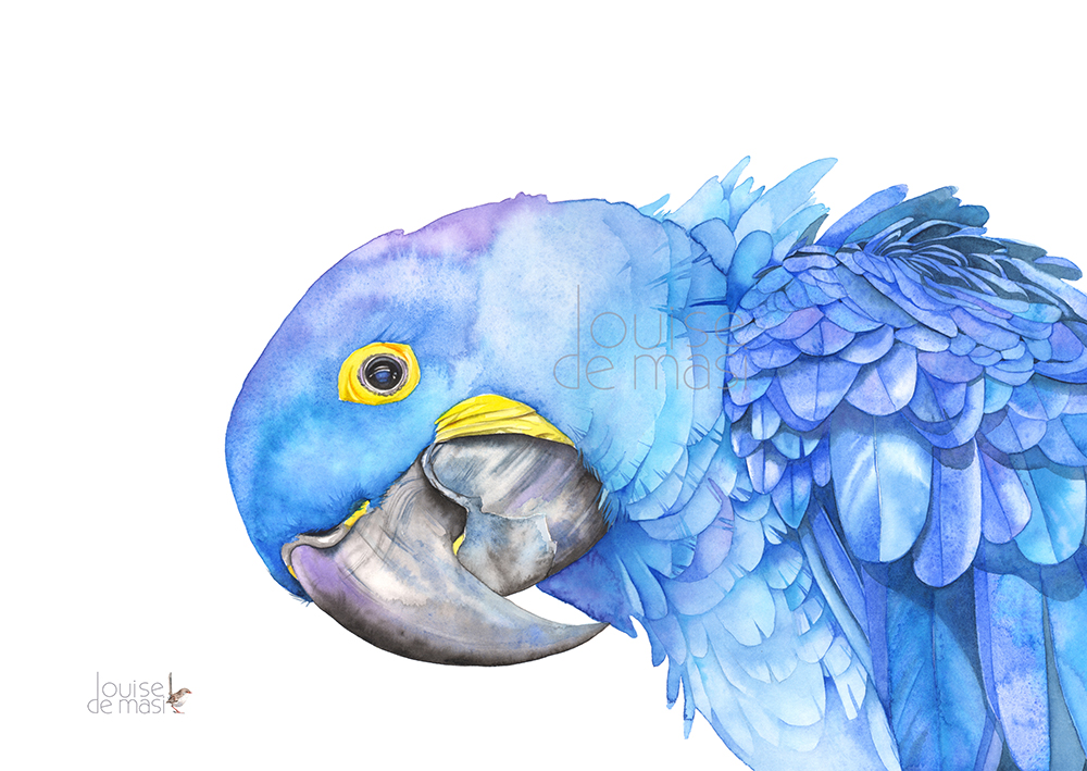 Macaw Hyacinth pixel reduced.jpg