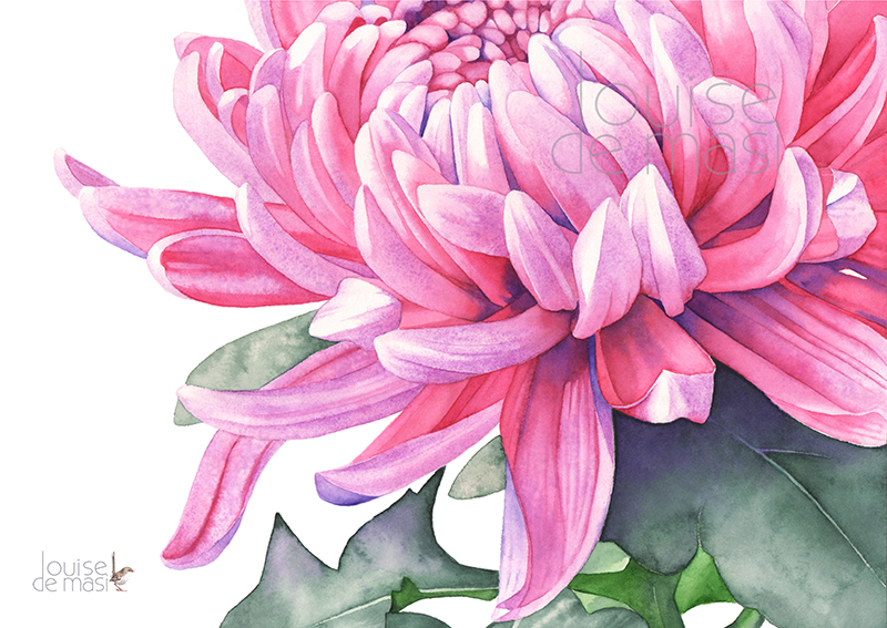 Chrysanthemum -pixel reduced.jpg