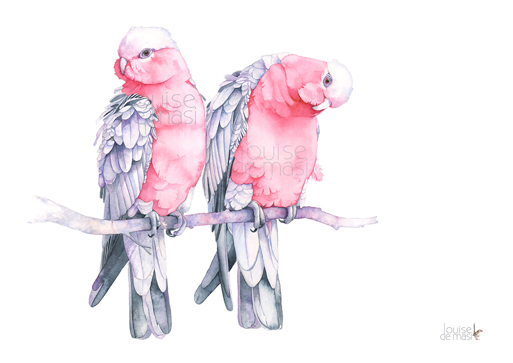 Birds Watercolour Prints