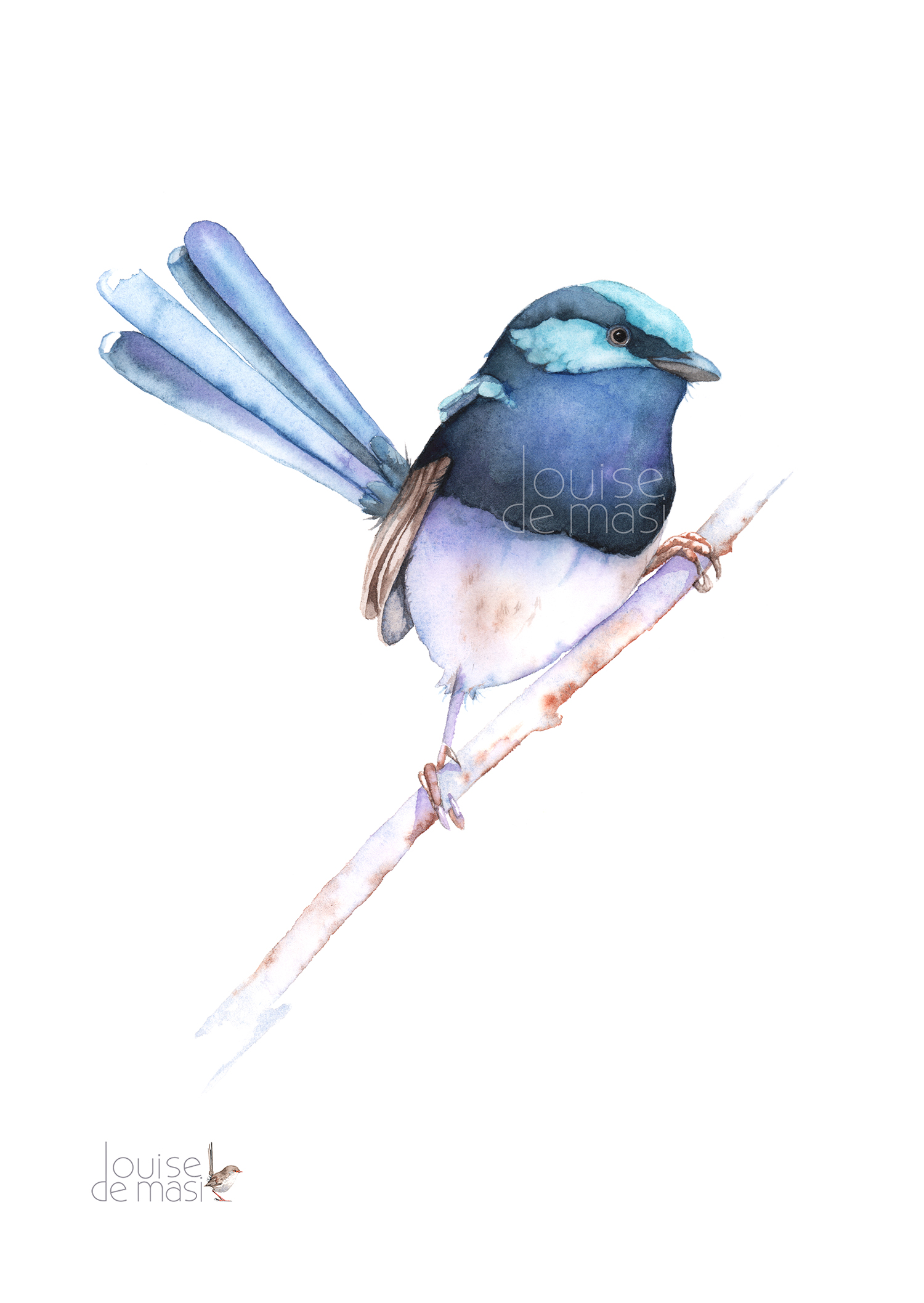 Fairy Wren in book- pixel reduced.jpg