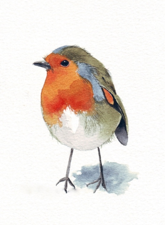Robin-in-watercolour-louise-demasi