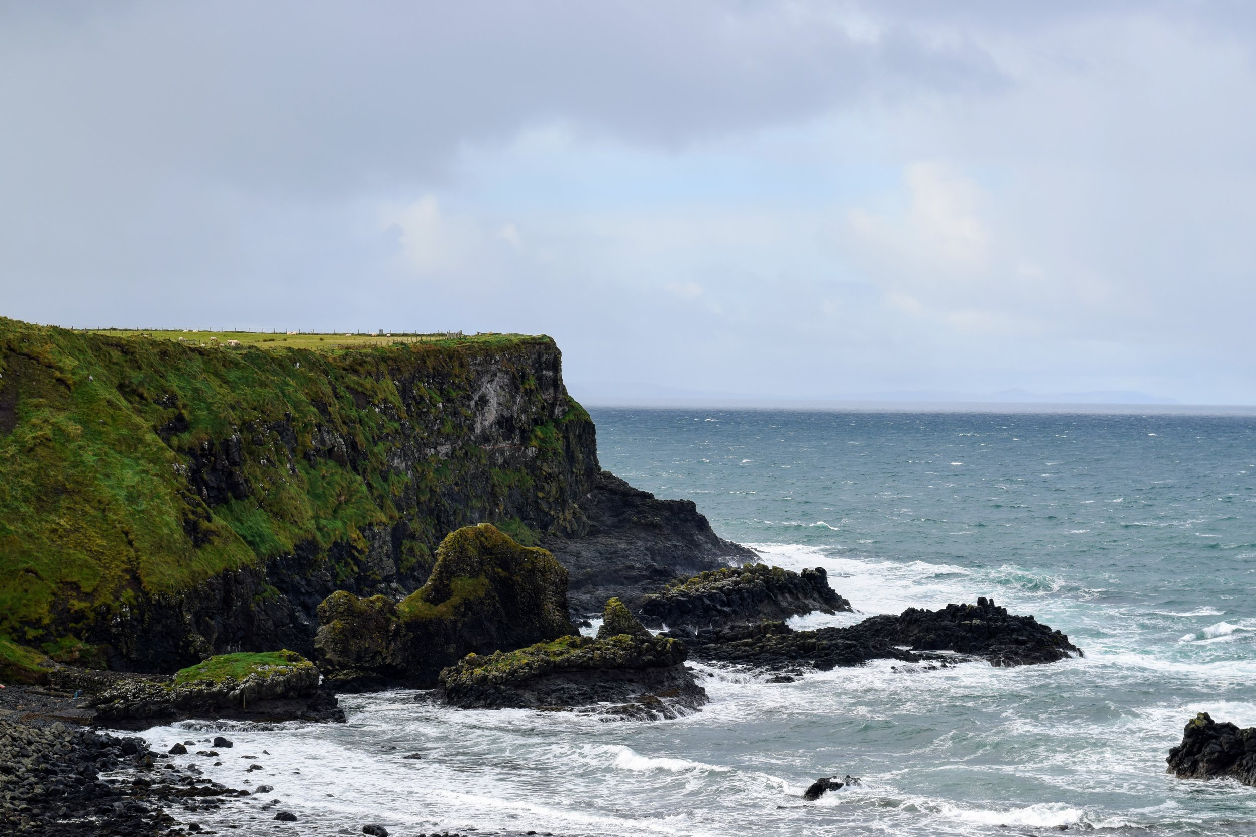 Sheep grazing near Giant's Causeway  (Nikon D3330, 50mm, f/8, 1/250 sec, ISO 250)