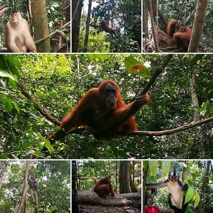 Indonesian jungle tours