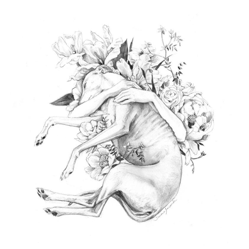 Galgo con flores - Print