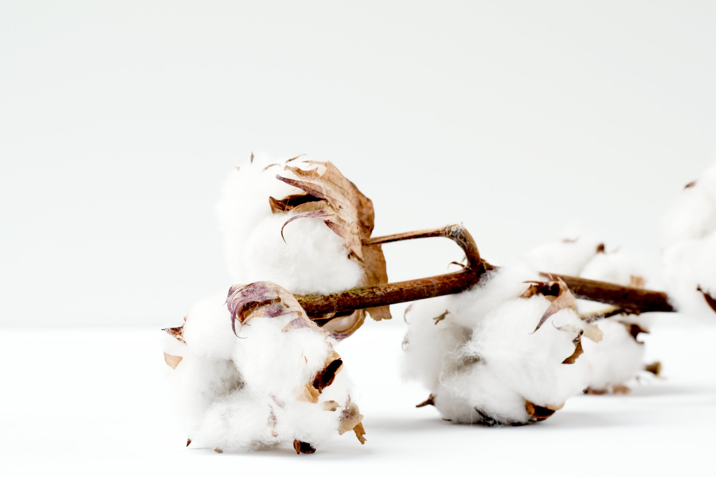 conventional-cotton-vs-organic-ethical-clothing-sustainable-fashion