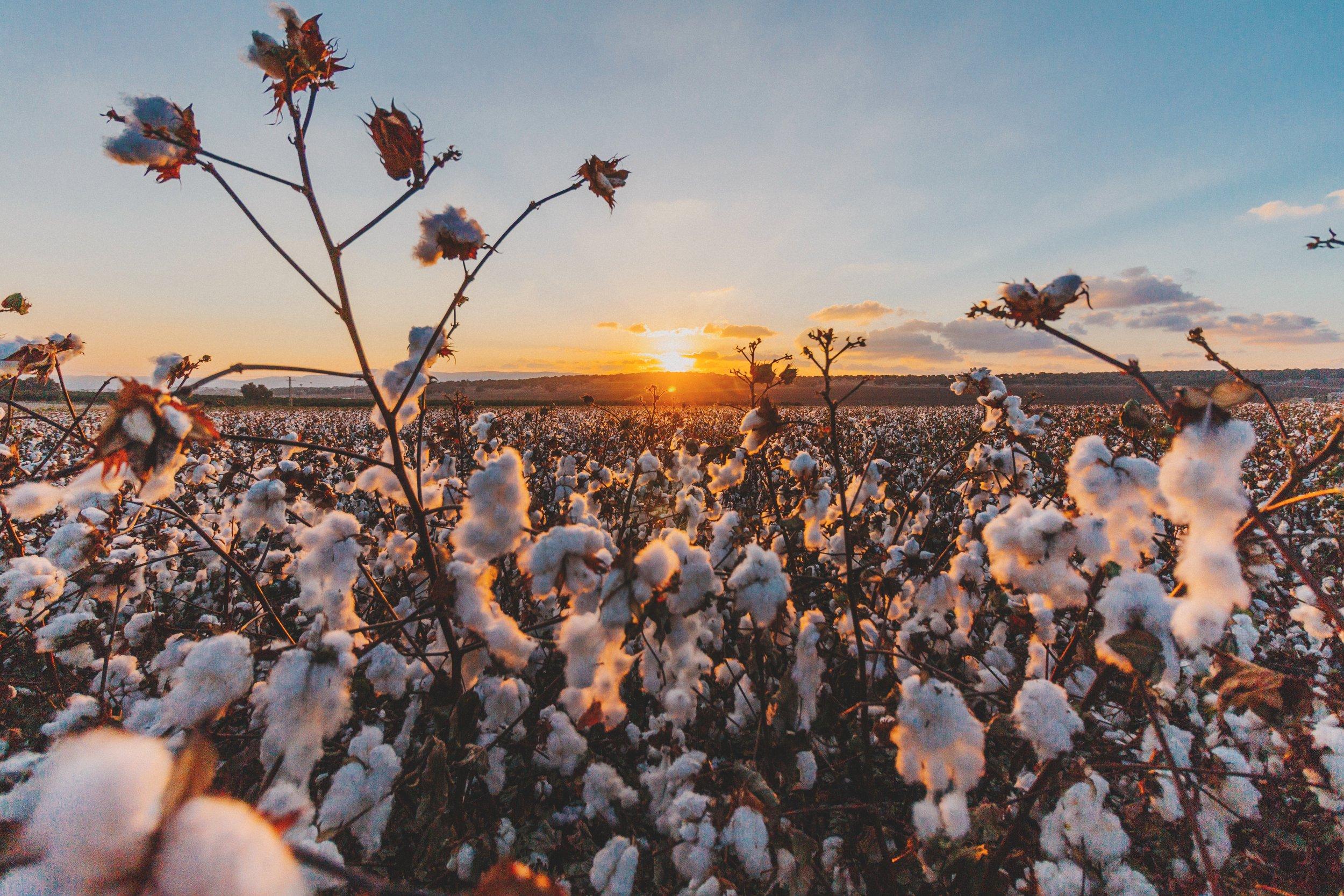 natural-cotton