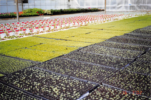 Thousands of seedlings are starting to show through...