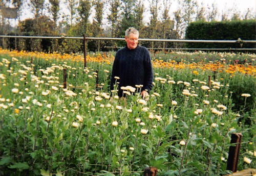 Willie in the Chrysanthemum fields, as they come into bloom