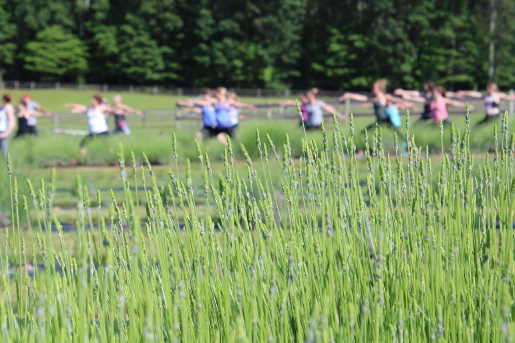 Yoga at  Hope Hill Lavender Farm