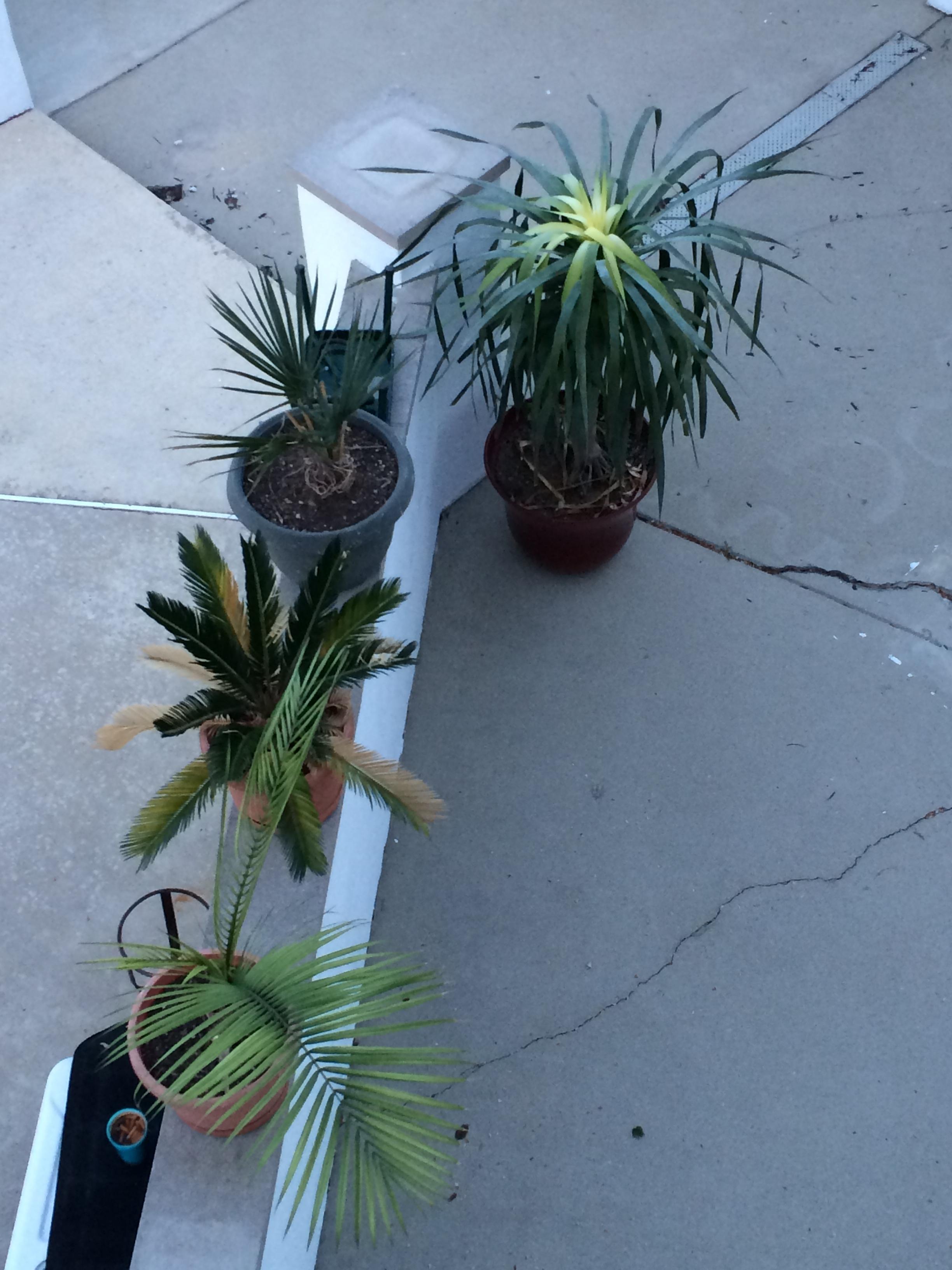 Plants poolside.JPG