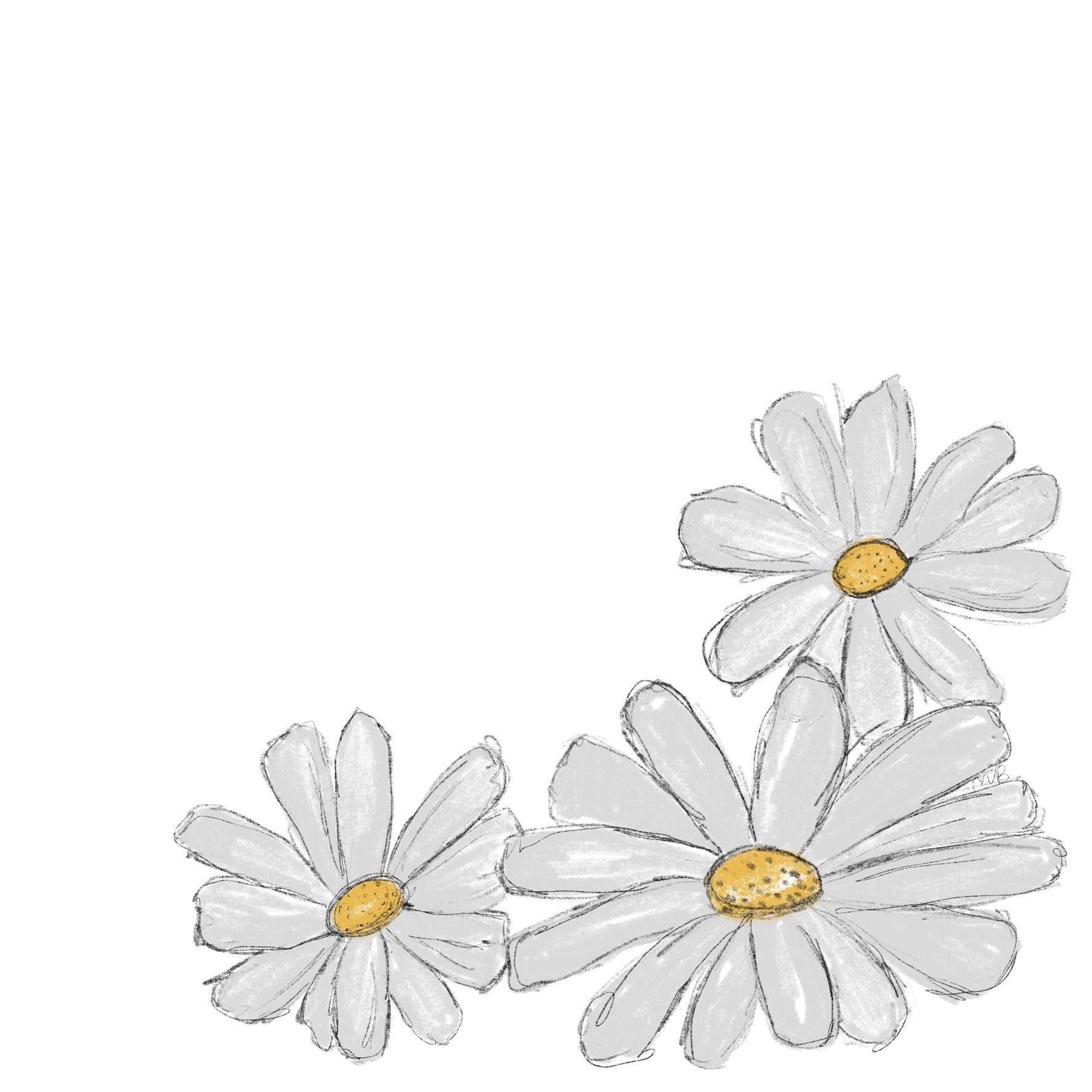 daisy-illustration-madison-beaulieu.JPG