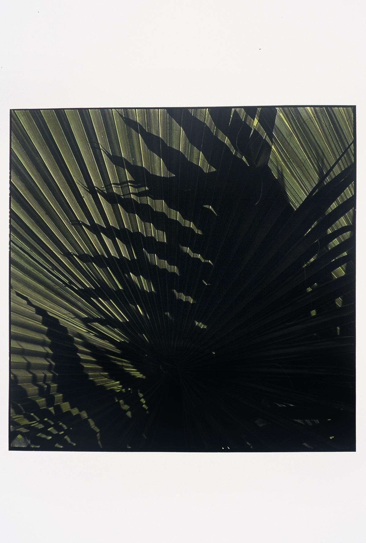"""3-4-05, A.M., #9  40"""" X 40"""" Oil on silver gelatin 2005"""