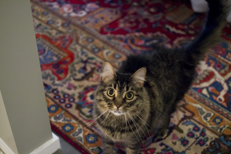memphis pet photographer.jpg