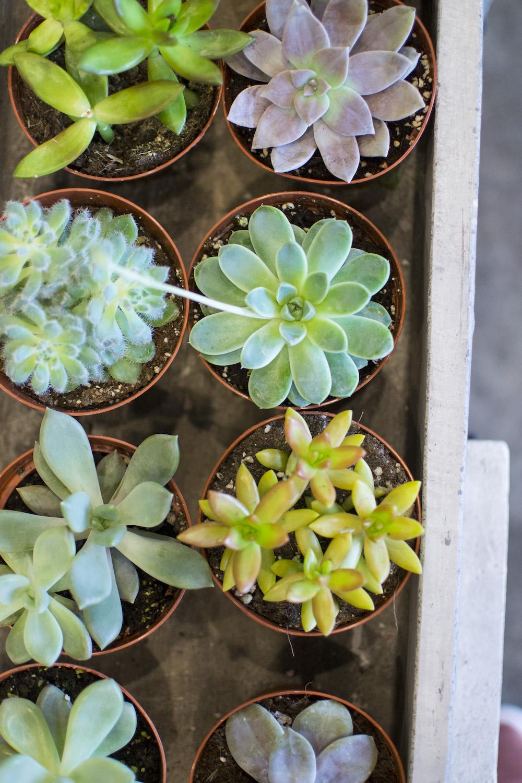 succulent photo garden district.jpg