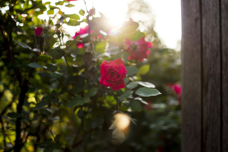 memphis florist.jpg