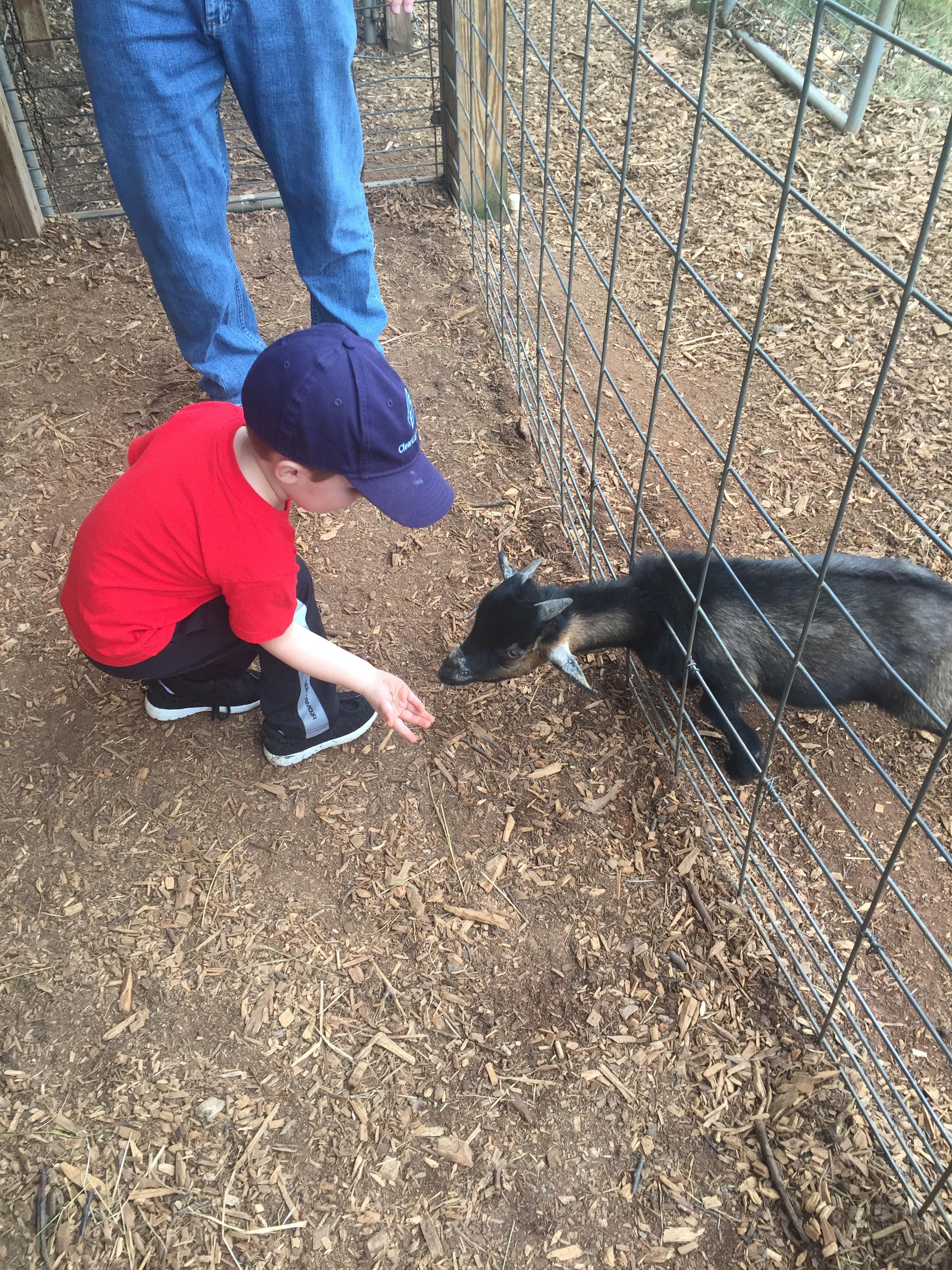 Low Budget Birthday - Farm