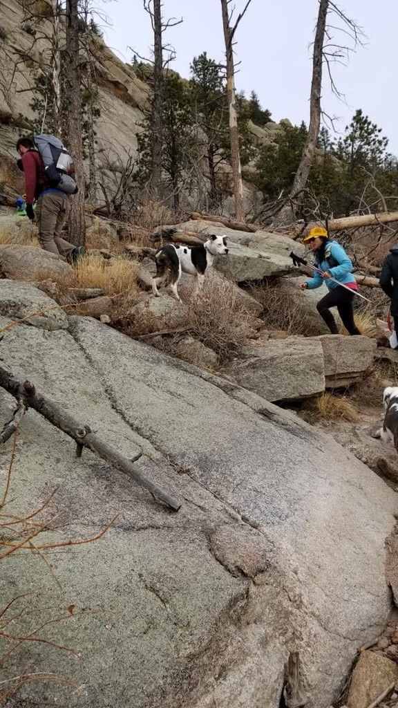 These very energetic pups probably did twice the amount of miles as we did, as they were running up and down the mountain telling us to hurry our little tushes up!