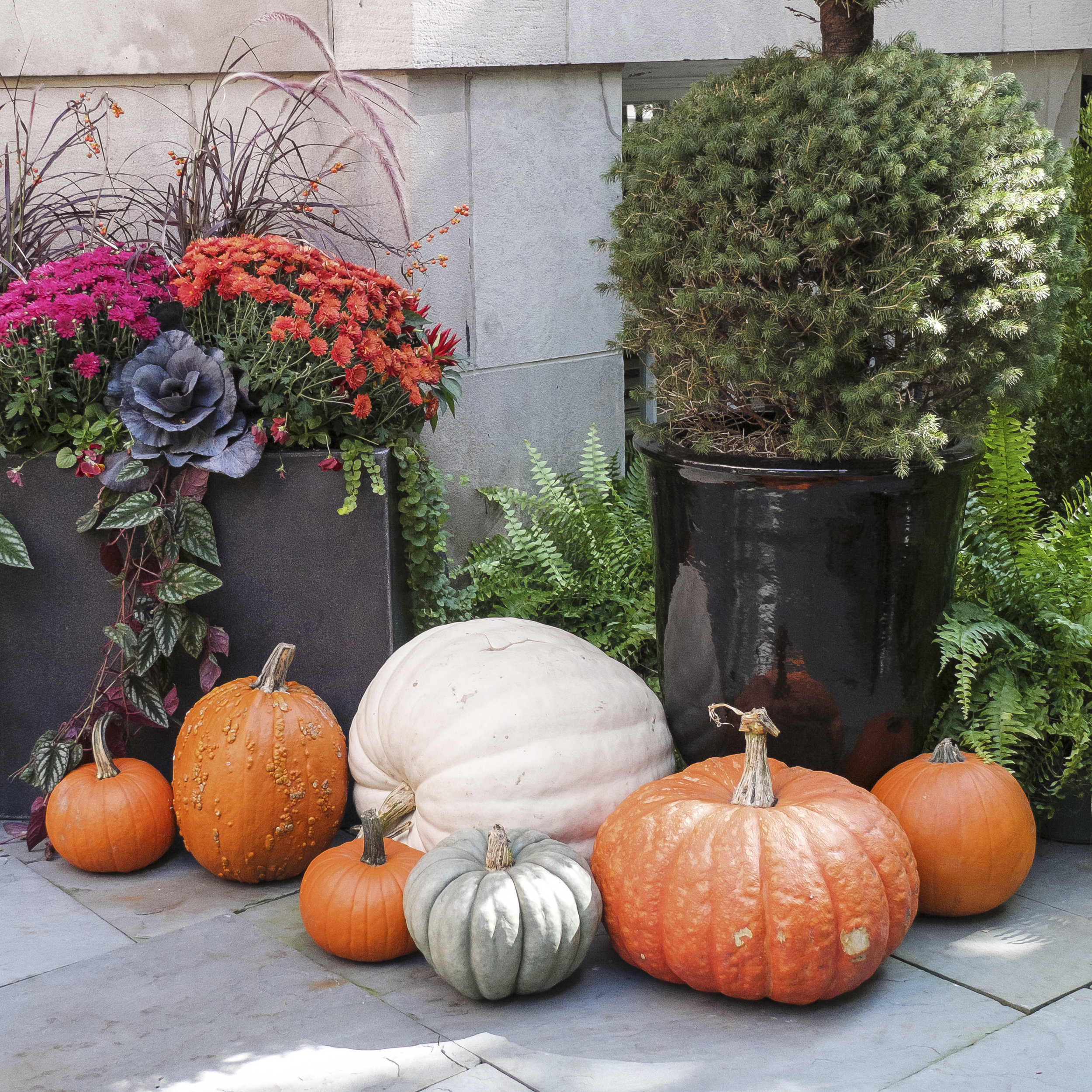 Simply clustering a variety of harvested pumpkins, gourds and squashes can just as easily elevate your home's decor.