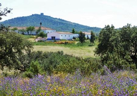 Obras is set on a cork farm, east of Lisbon