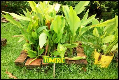 Tumeric