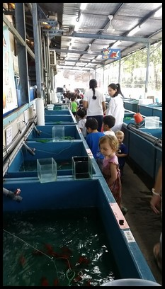 The children had a walk through the sales section, where fish that are not of standard, are sold.