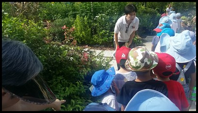 The children were then introduced to variegated Indian borage. They learnt that its leaves can be eaten raw or made into a decoction to treat dry cough.