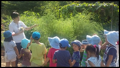 The children also learnt about the asparagus and how its young shoots are used and cooked as an appetizer or side dish.