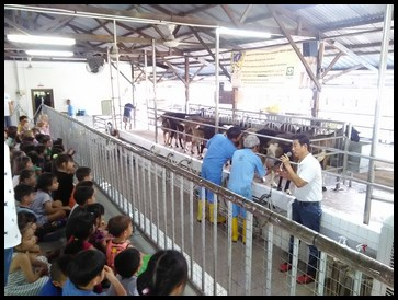 Watching the milking process.
