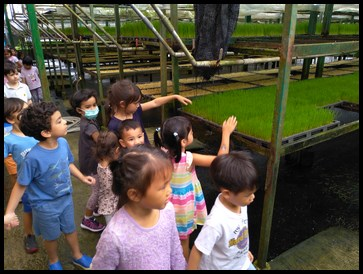 The kids were given a chance to feel the wheatgrass