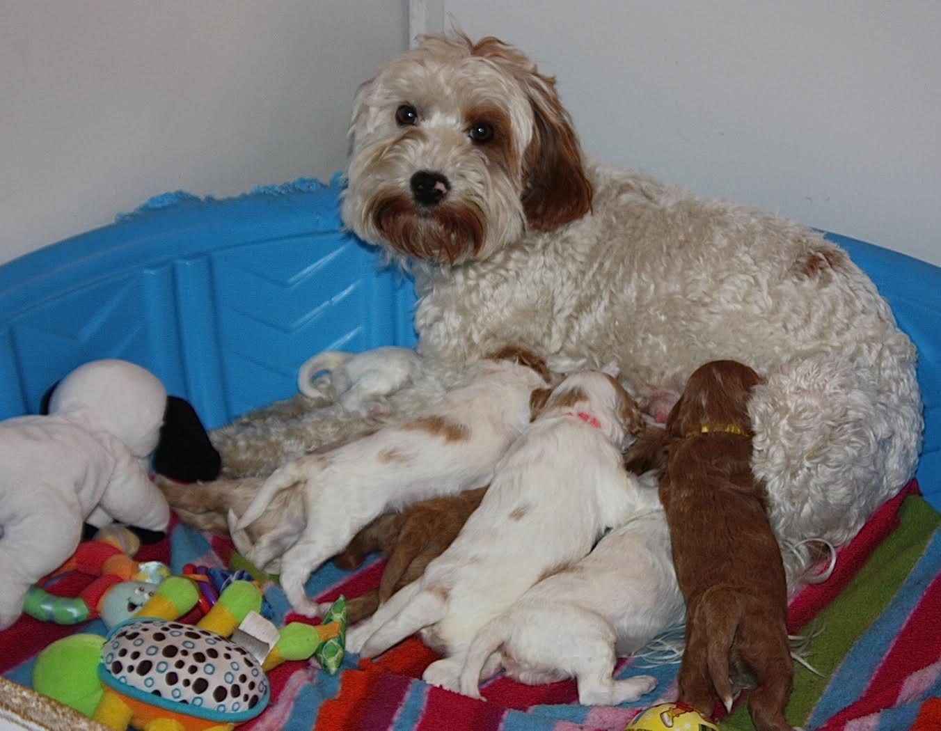 Tasha is a great momma!