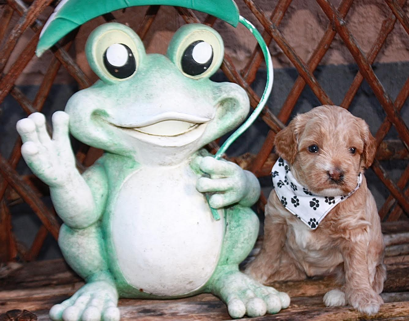 Madame White and her froggy friend!