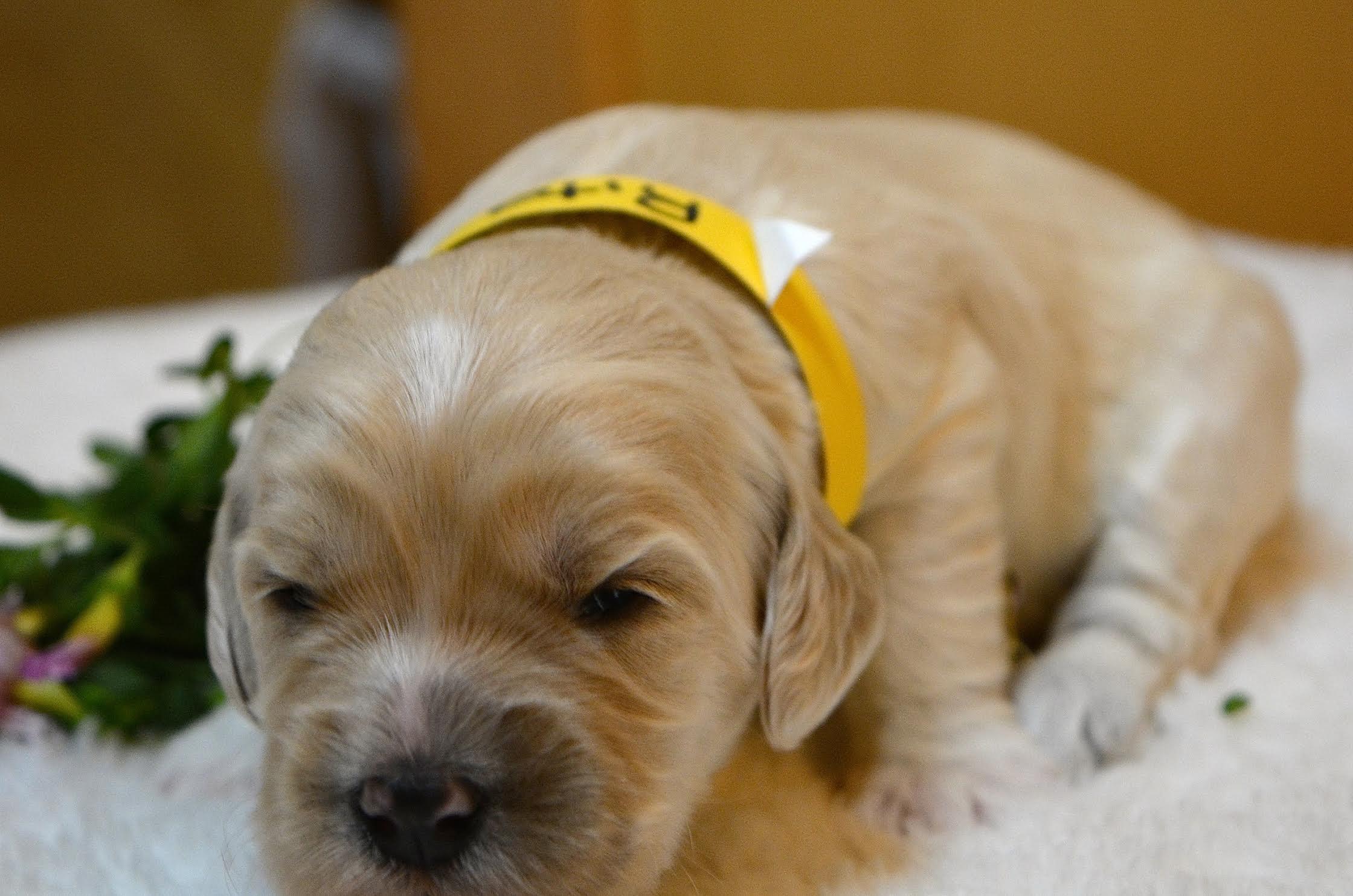 Rita Yellow