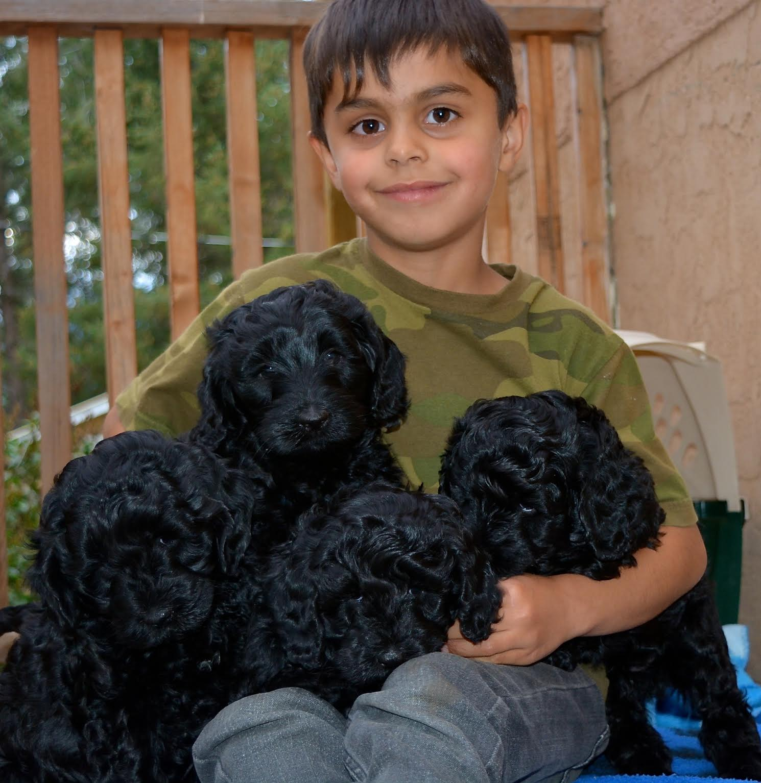 Lucca and the pups!