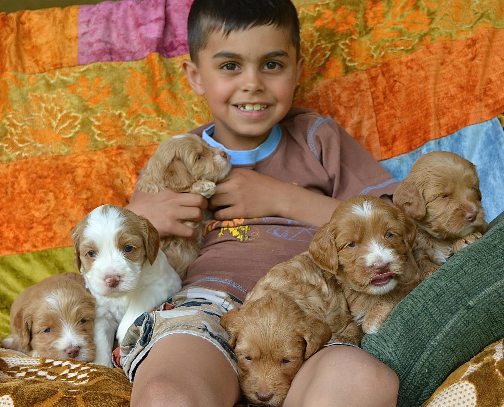 Lucca, The Puppy Socializer and Polly's Puppies