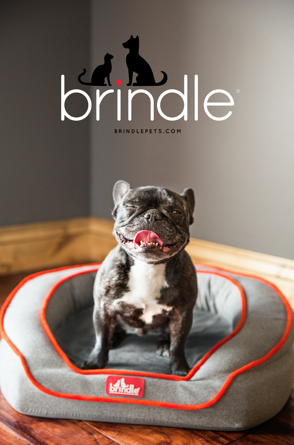 Brindle Pets - Branding, Product & Package Design