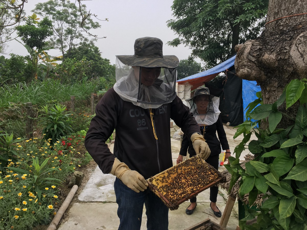 honey making 1.jpeg