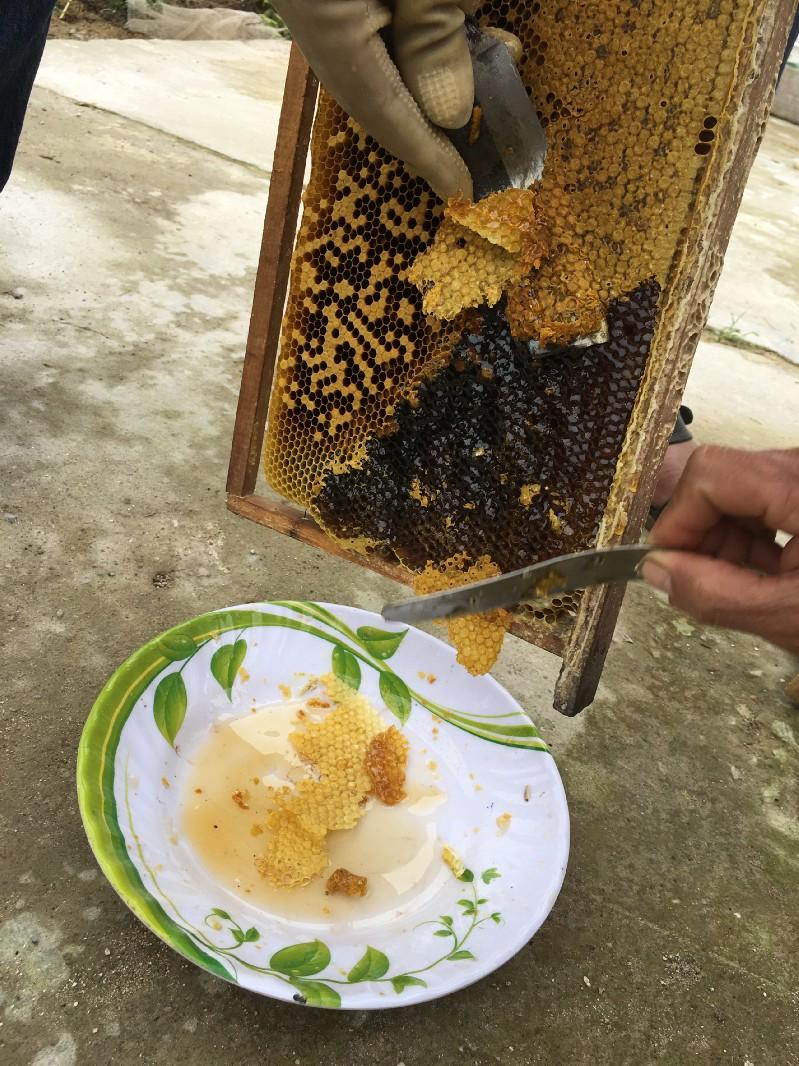 honey making 3.jpeg