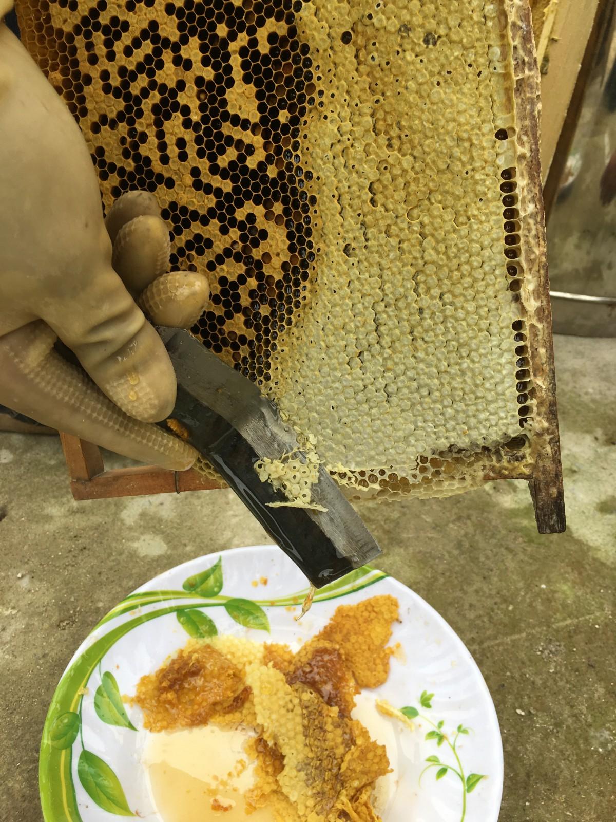 honey making 4.jpeg