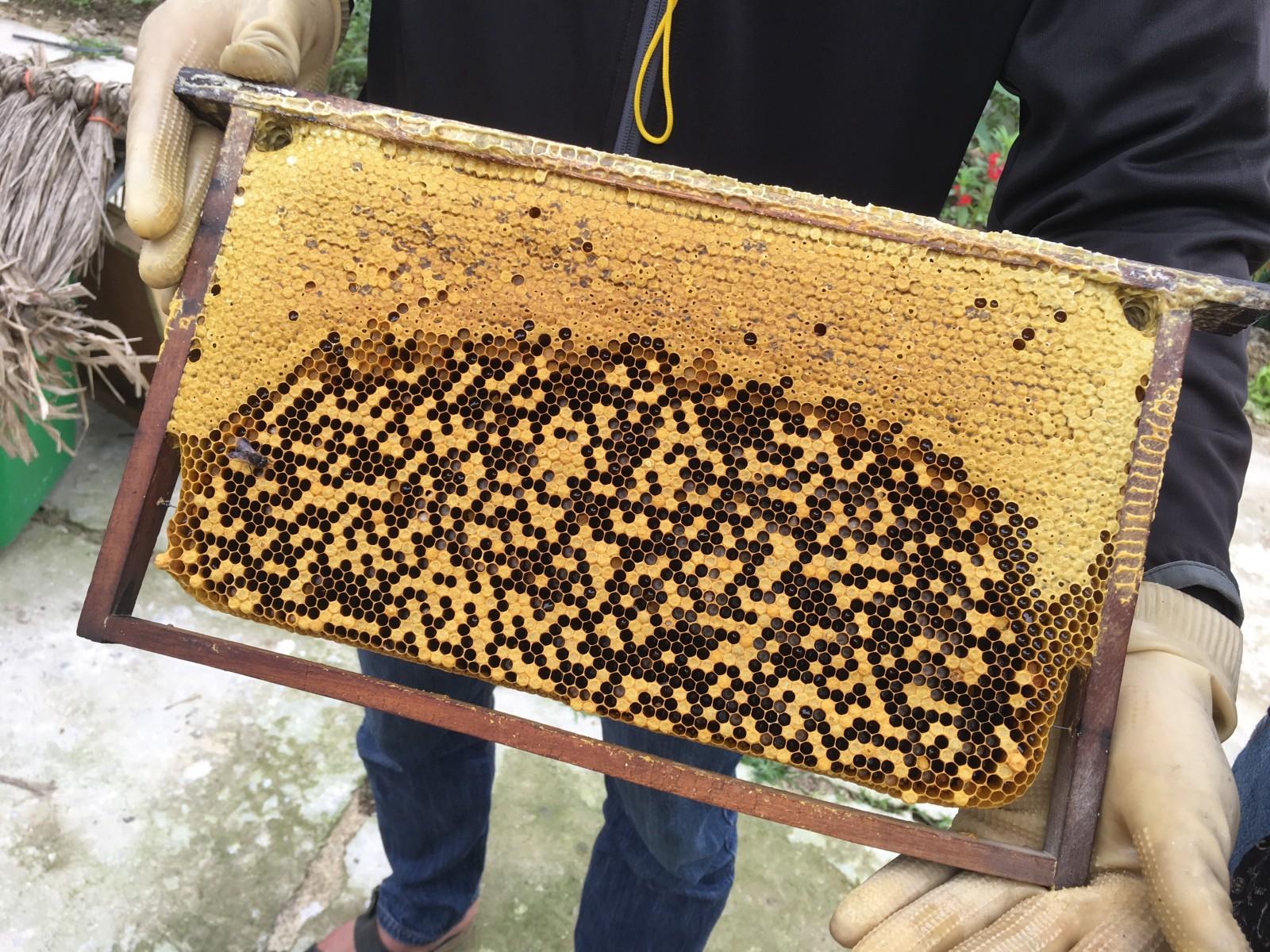 honey making 6.jpeg