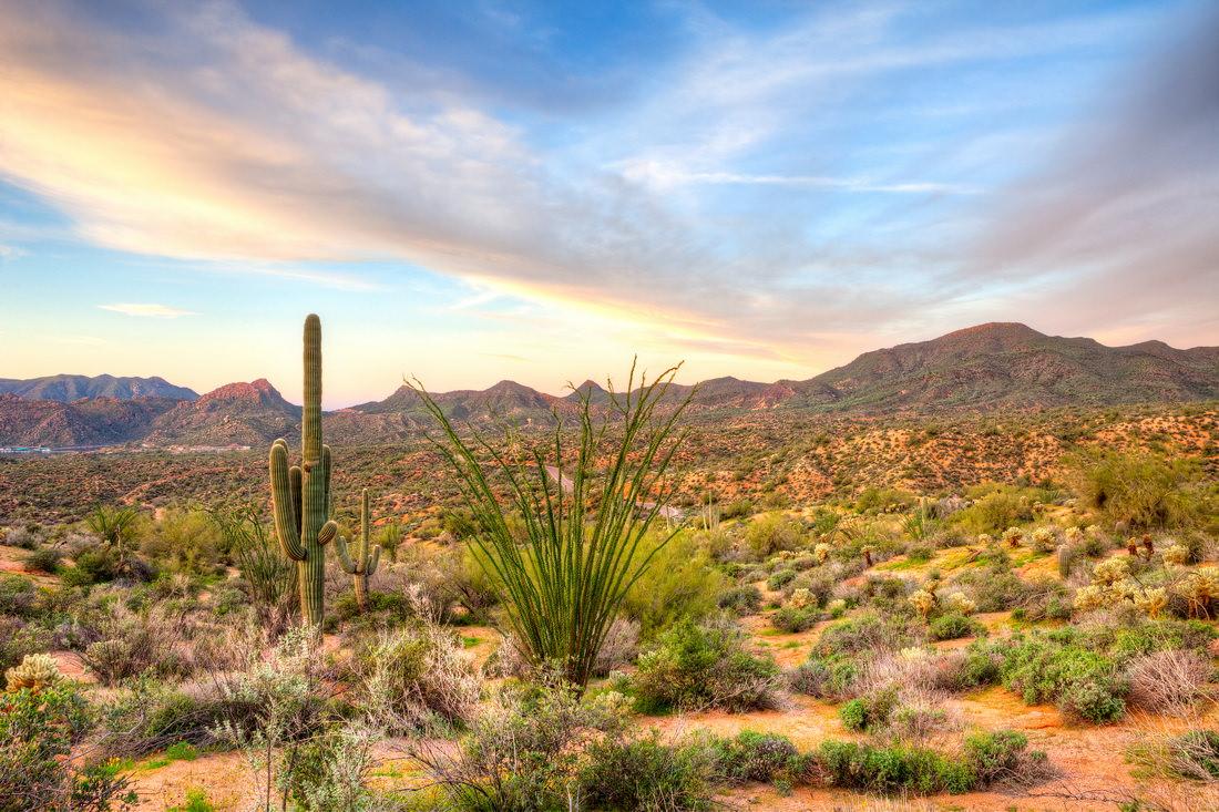 palm-desert-oasis.jpg